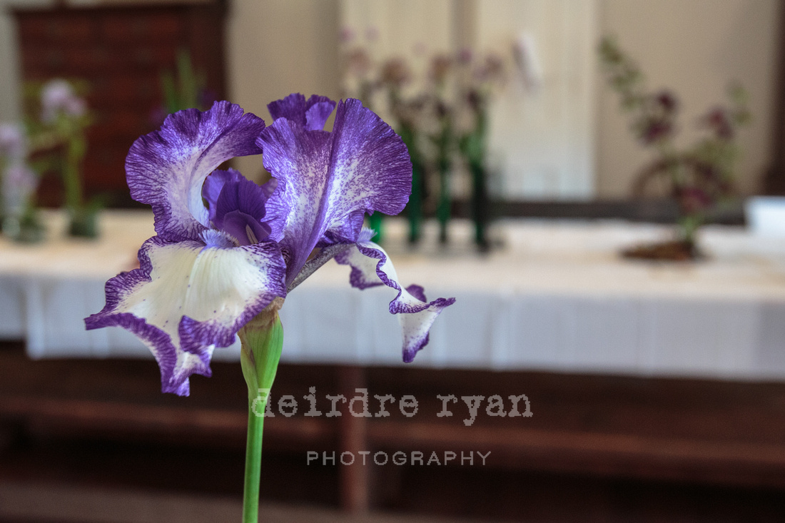 The Annual Iris Festival in Bordentown, NJ